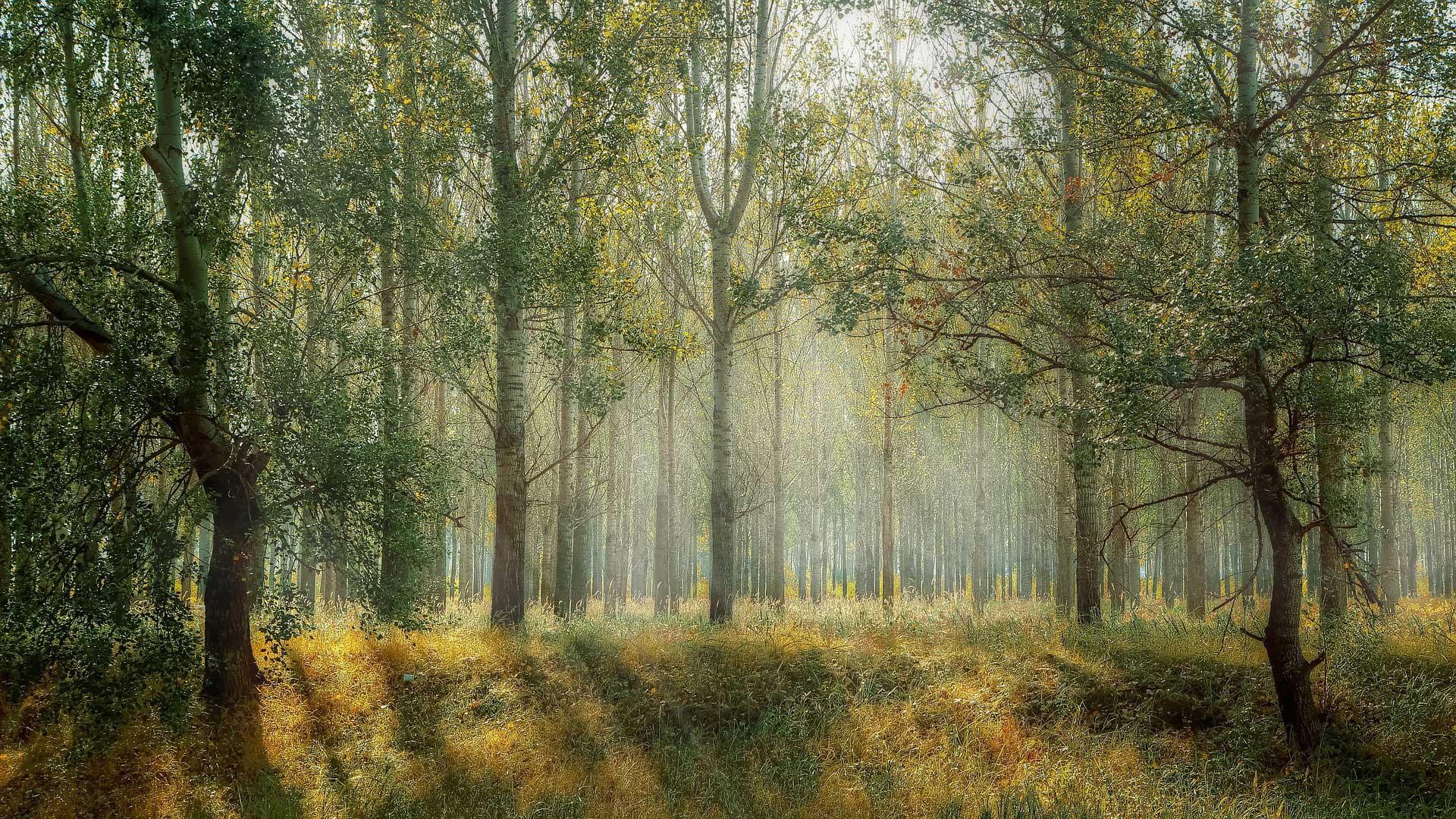 Homepage - Ward Timber